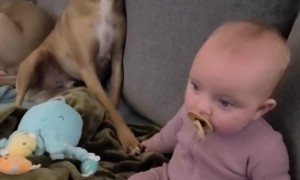 Dog and Baby Touching Paw and Hands During Movie