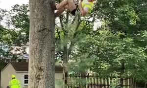Arborist Climbing up a Tree
