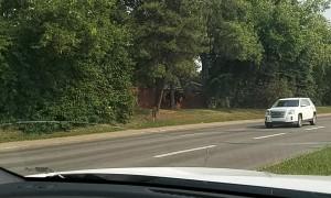 Moose Trotting Through the City