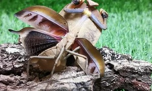 Martial Art Mantis