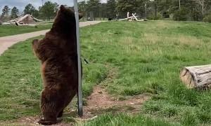 Itchy Bear Needs a Back Scratch
