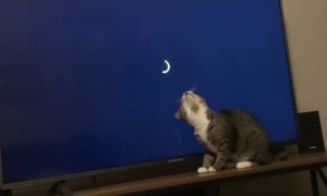 Sweet Kitty Plays with Loading Screen