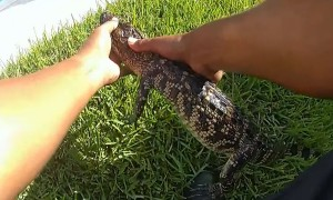 Texas Police removed alligator found in hot tub
