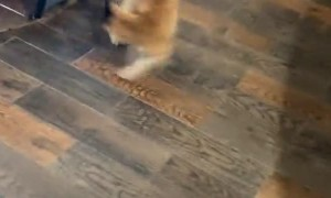 Fly Tape Catches Cat