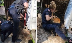 Police rescue dog trapped deep under home's foundation