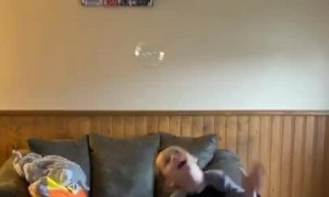 Husky and Son Popping Bubbles Together