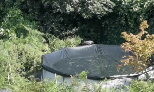 Pigeon Has Lucky Escape While Resting on a Pool
