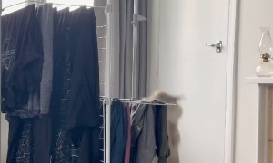 Cat Can't Escape Tipping Clothesline