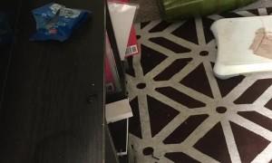 Destructive Groundhog Digs Through Back Room