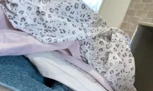 Laundry Pile Hides Puppy Surprise