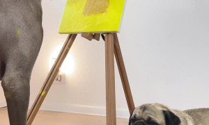 Puppy Dog Paints a Portrait of Her Pug Friend