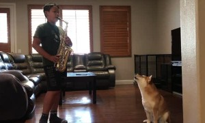 Doggy Joins Duet With Saxophone