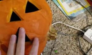 Pumpkin Headed Puppy