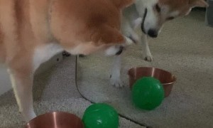 Mirror Keeps Mochi from Second Ball