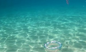 Turbulence Twists Jellyfish Up in Bubbles
