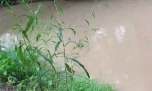 Screaming Frog Springs Into Creek After Being Startled