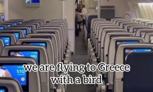 Flight Delayed by Sneaky Pigeon