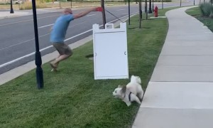 Excited Doggy Drags Man Along For Zoomies