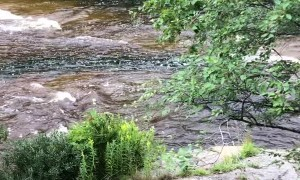 Deer Fawn Takes a Dive off 50 Foot Waterfall
