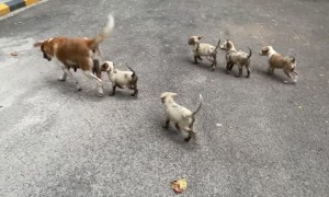Trapped Puppies Reunited with Mom