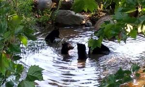Baby Bears Taking A Bath