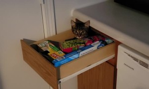 Ghost Drawer or Sneaky Kitty