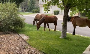Wild Horses Bring Show Off Their Cute Colts