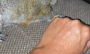 Pet Squirrel Loves Attention