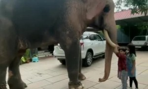 Kids play with very friendly elephant