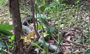 Snake Slithers Out From Supermarket Shelf