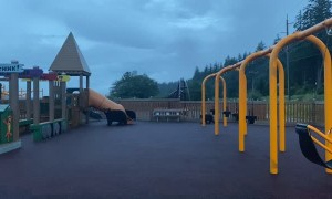 Mama Bear and Cubs Take Over Playground in Juneau, Alaska