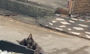 Sneaky Cat Snags a Fish