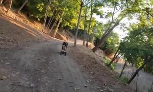 Rush the Skateboard Riding Doggy
