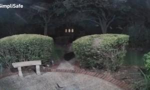 Fox Rings Doorbell During Late Night Visit