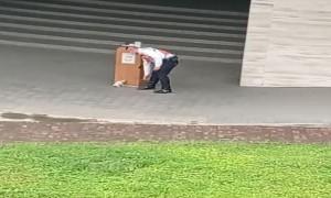 Playful Kitten Destresses Security Guard