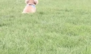 Boy and Dog are Bound to be Buddies