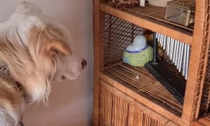 Clever Dog in Love With Her Wind Chime