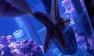 Starfish Snacks on Shrimp