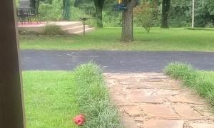 Dog Responds to Squirrel Spotting Call