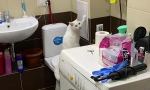 Noisy Kitty Bangs Away at Wall