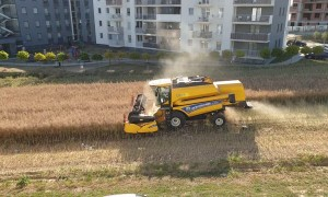 Farmer That Refused to Sell Land Harvests Between Apartment Buildings