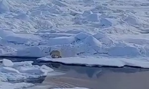 Horrific video shows melting of ice floe and glacier