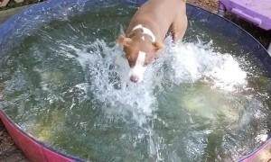 Splish Splash Fun for Pups