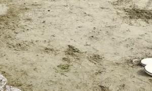 Man Summons Pet Meerkats