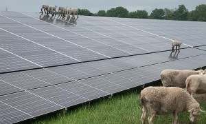 Lambs Scale Solar Panels