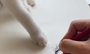 Kitty Finds Paper Bug A Little Sketchy