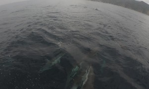 Pod of Dolphin Entertain Ladies on Front of Boat