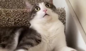 Cat goes into