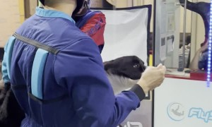Doggy Trains for Indoor Skydiving