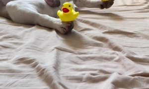 Sleepy Pup with Ducky Paws